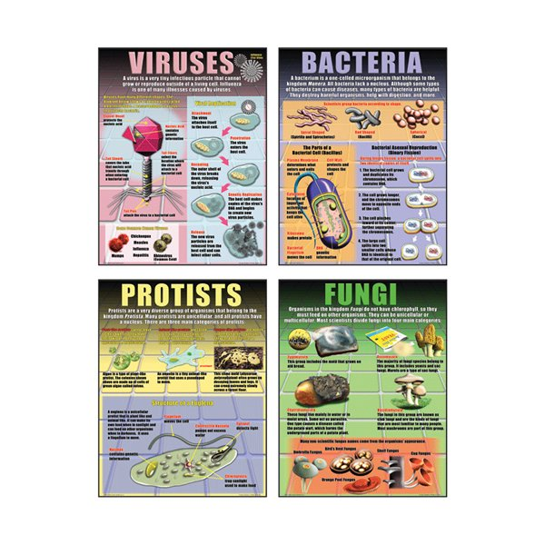 Viruses, Bacteria, Protists & Fungi Poster Set - Learning Gizmos ...